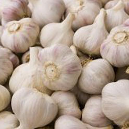 Really Garlicky Co Garlic Bulbs