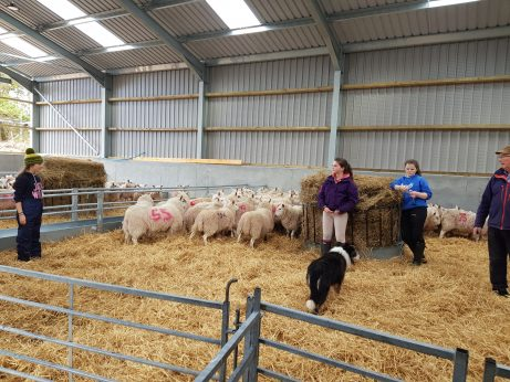 The New Lambing Shed